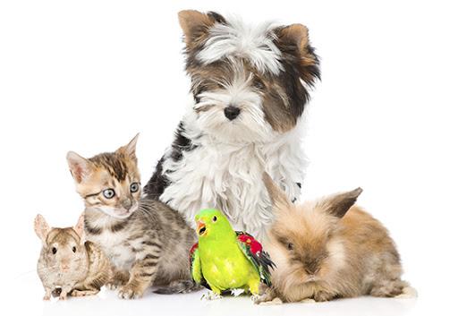 gyvūnų prekės internete